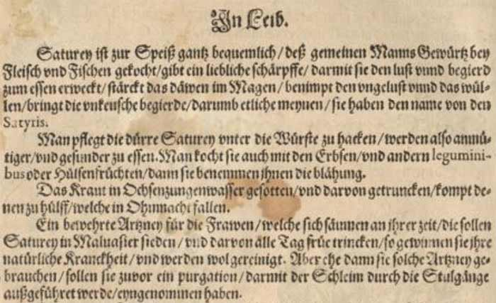 Bohnenkraut im alten Kräuterbuch