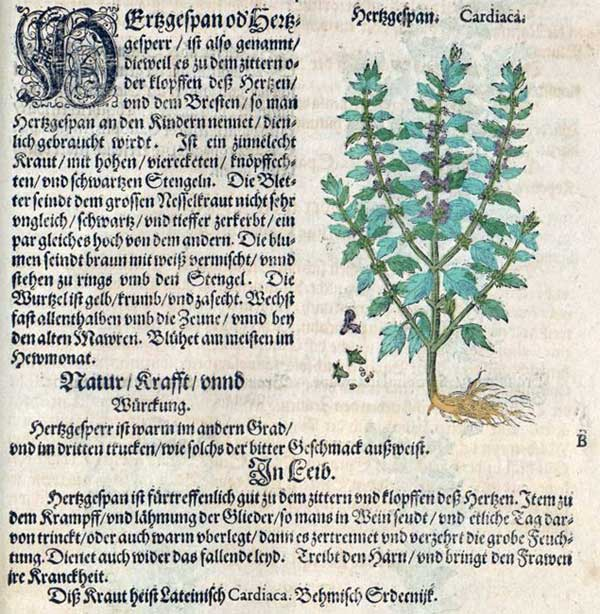 Herzgespann im alten Kräuterbuch